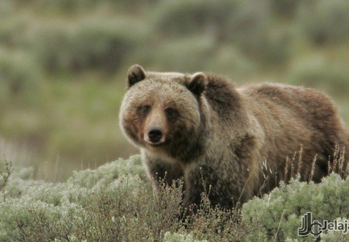 Harga Memuncak, Bitcoin Telah Keluar Dari Bear Run?