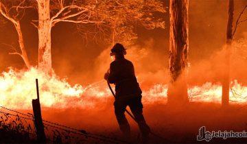 Binance Charity Targetkan Dana $1 Juta Untuk Bantuan Kebakaran Hutan Australia